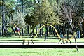 Taylor lake park caterpillar01.jpg