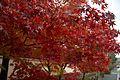 Tenryu-ji (3261773215).jpg