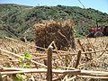 """Terre agricole à côté de la montagne """"Sidi Ali Chbeb"""".jpg"""