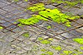 Tessellated Pavement 03.jpg