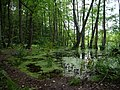 Teufelsbruch swamp at the Bäckerfurt in summer.jpg