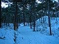 Texel - De Dennen - View WSW in Winter.jpg