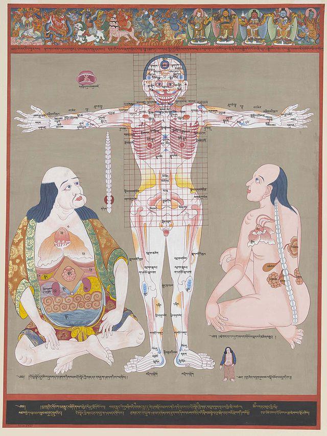 History Of Anatomy Wikiwand