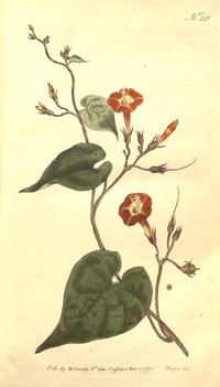 The Botanical Magazine, Plate 221 (Volume 7, 1794).png