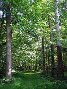 The Chase Wood - Newbury.jpg