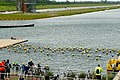 The Human Race triathlon - swimming - geograph.org.uk - 1309712.jpg