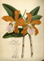 The Orchid Album-01-0080-0026.png