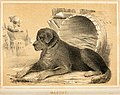 The alphabetical drawing book, and pictorial history. (of quadrupeds (1847) (17488995903).jpg