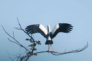 The beautiful bird.jpg