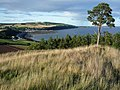 The northern Scots Pine on Ormond Hill - geograph.org.uk - 980080.jpg