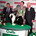 Tibetan terrier, Utility group winner, Crufts 2013.jpg