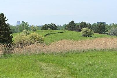 Zadrzewiona łąka z centrum Buffalo w tle