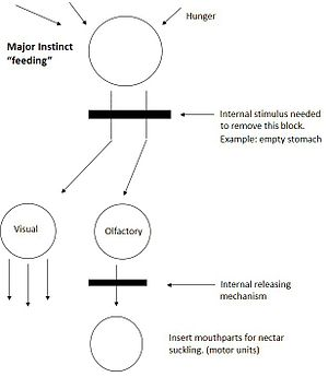 Nikolaas Tinbergen - Figure 1. Tinbergen's hierarchical model. Modified from The Study of Instinct (1951).