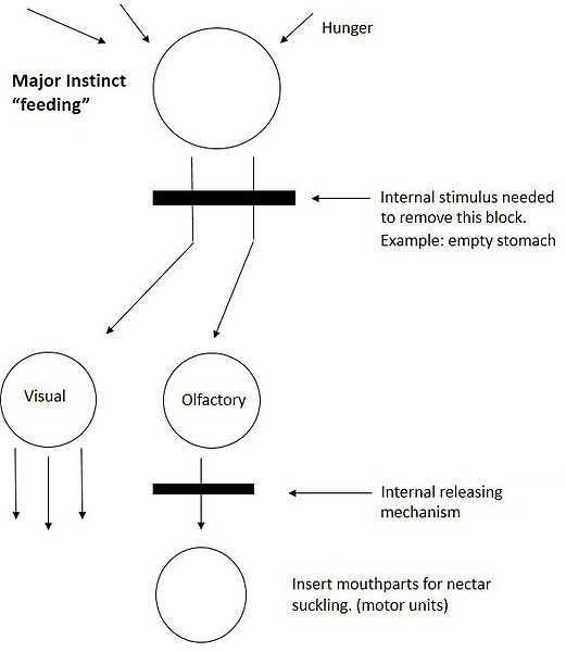 Figure 1. Tinbergen's hierarchical model. Modified from The Study of Instinct (1951).