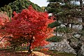 Tofuku-ji (4585125309).jpg