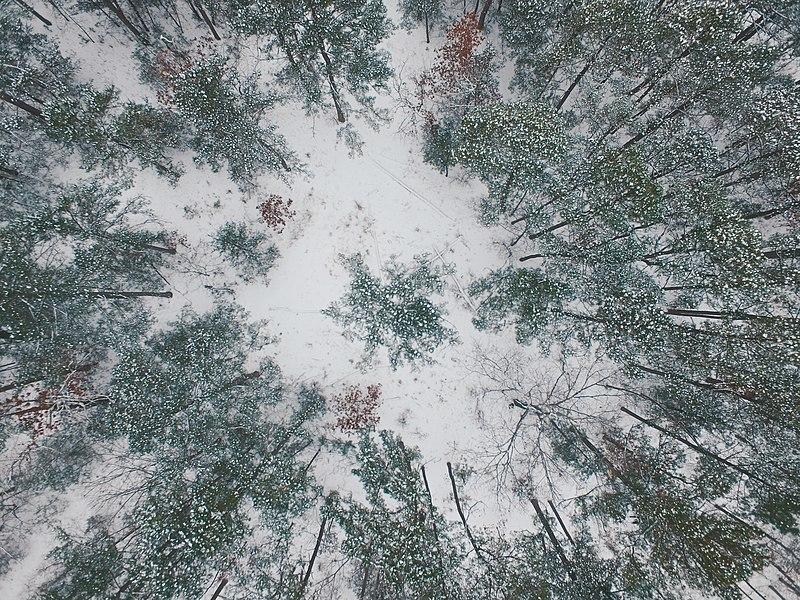 File:Top Down Snow Fall (Unsplash).jpg