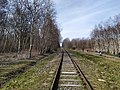 Tory kolejowe linia 397 Natolin.jpg