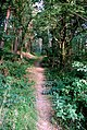 Track through coniferous woodland - geograph.org.uk - 552180.jpg