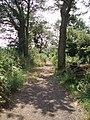 Trackway - geograph.org.uk - 194990.jpg