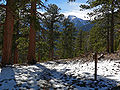 Trail Canyon trail 3.jpg