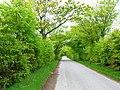 Tree-lined road near Milton of Dellavaird - geograph.org.uk - 177344.jpg