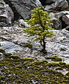 Tree (8034062958).jpg