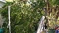 Tree Mess 4 (8196102490).jpg