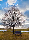 Tree and bench at Farquharson Park in Scarborough.jpg