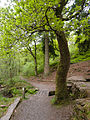 Tree in Tan-y-Bwlch (8060009142).jpg