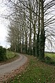 Tree lined lane at Duxford - geograph.org.uk - 1004855.jpg