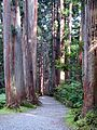 Tree lined path to the Togakushi shrine2.jpg