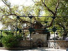L'esemplare di Platanus orientalis detto Platano d'Ippocrate, posto nel centro del capoluogo, è considerato uno dei platani più grandi d'Europa