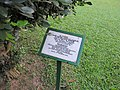 Trees planted by foreign dignitaries in the park of Jatiyo Smriti Soudho 04.jpg