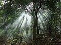 Trees through Woodsmoke - Balgue - Ometepe Island - Nicaragua (30987066803).jpg