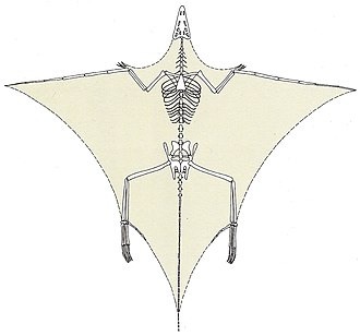Tanystropheus - Nopcsa's restoration of Tanystropheus as a long tailed pterosaur