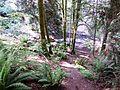 Trillium ovatum habitat - Flickr - brewbooks.jpg