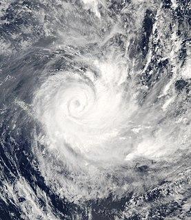 Cyclone Ivy
