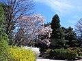 Tudor Place in April (22863975947).jpg