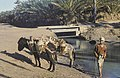 Tunis1960-050 hg.jpg