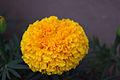 Turek flower.jpg
