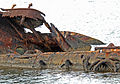 US Navy 061203-N-4774B-015 The rusted hull of the USS Utah remains in the water just off Ford Island. Three aerial torpedoes struck the USS Utah, causing the ship to sink during the 1941 attack.jpg