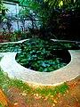 Valuable Plant at Baldha Garden.jpg