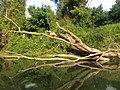 Veleka river - IMG 6099.jpg