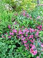 Verge flowers 9.JPG
