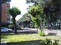 Viale Italia Tagliata Maggio 2010 - panoramio.jpg