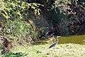 Victoria Falls 2012 05 24 1683 (7421907796).jpg