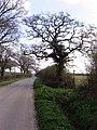 View towards Atrim - geograph.org.uk - 377973.jpg