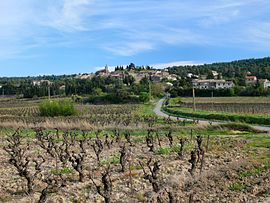 Vineyard in French wine region of Montbrun-des-Corbieres.jpg