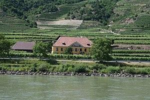 Grüner Veltliner - Grüner Veltliner is widely planted in the vineyards along the Danube in Wachau.