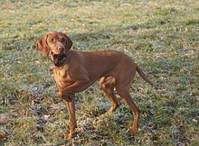Dog Training Hanover Pa